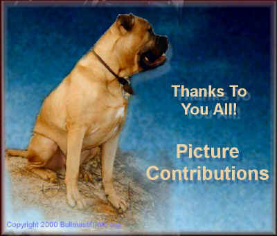 Please accept our deepest gratitude for helping to educate the public on the Bullmastiff Breed.